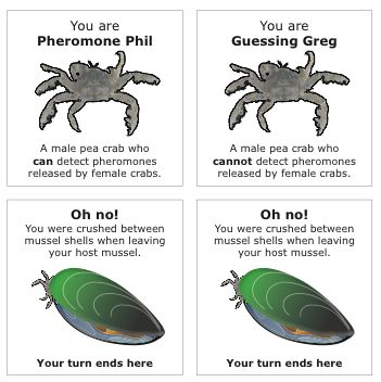 STUDENT ACTIVITY -  In this activity, students play a card game that models the journey of a male pea crab (a parasite of green-lipped mussels) from his mussel host and back again.   Purpose:  This activity will help students to grasp one aspect of pea crab biology – the risky journey of a male pea crab (a parasite of green-lipped mussels) to locate a female crab in another mussel and fertilise her eggs. The card game works as a model of the mate location process.