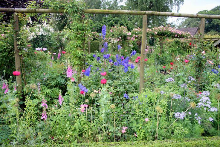 13 best Pflanzen images on Pinterest Plants, Balcony and Garden