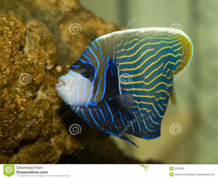 Tropische Vissen 3769790 Jpg 1 300 215 1 067 Pixels Kleurige