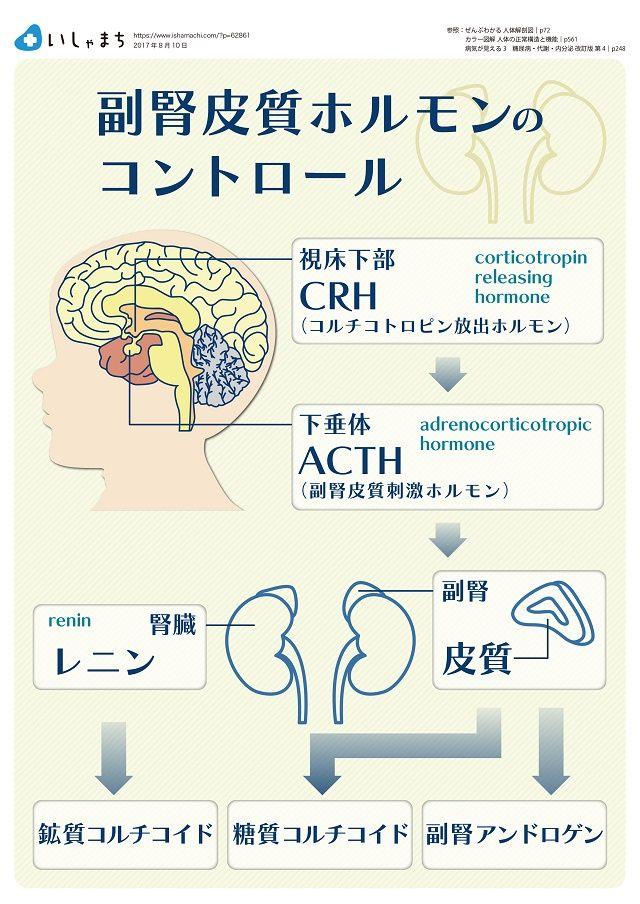副腎皮質ホルモンの過不足で生じる疾患 いしゃまち 看護ノート 副腎 神経系