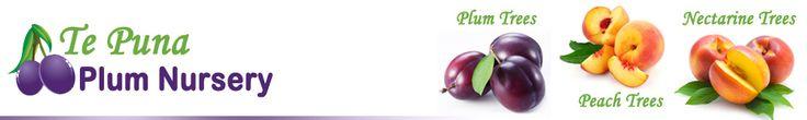 Buy Plum trees, buy peach trees, buy nectarine trees online