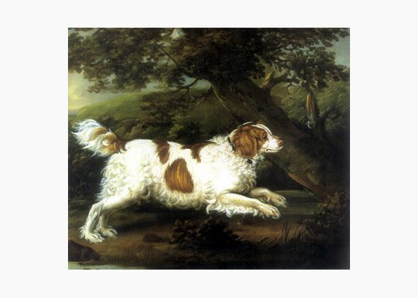 Dog breeds that have become extinct ~  English Water Spaniel