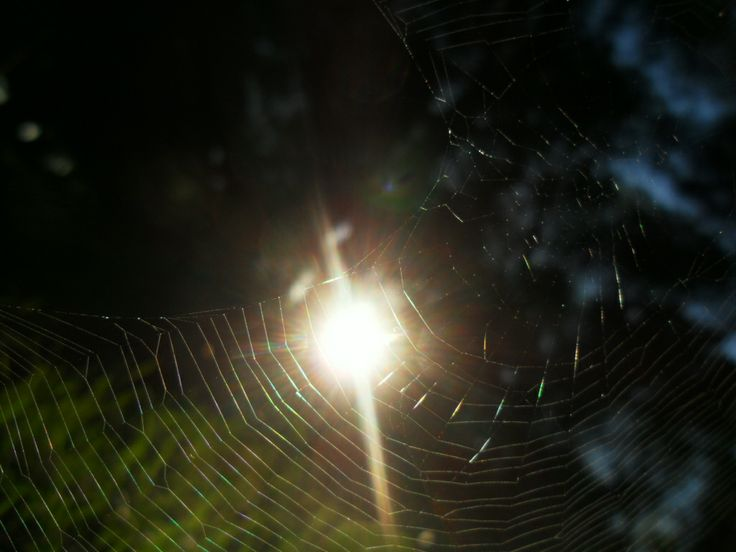 It seems that Sun is caught in a spider web...!