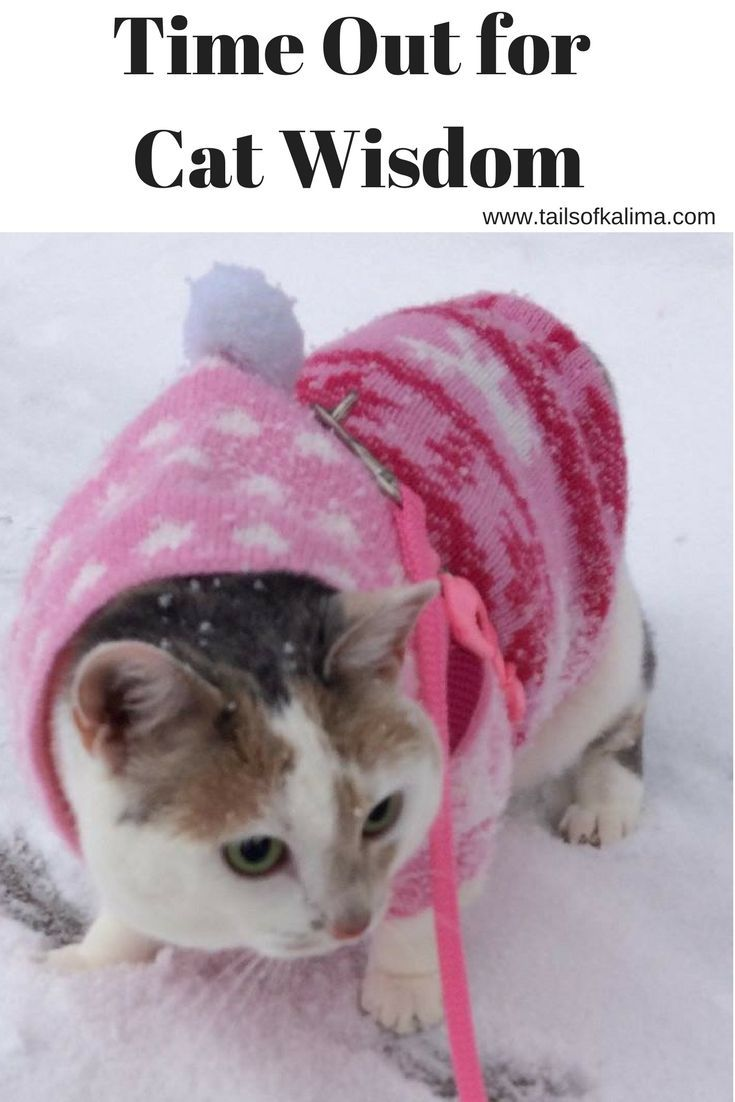 Time Out For Cat Wisdom A Walk In The Snow Therapy Cat Cat With Blue Eyes Cats
