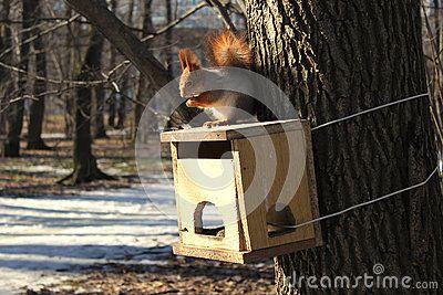 Squirrel on the bird feeder in the Park