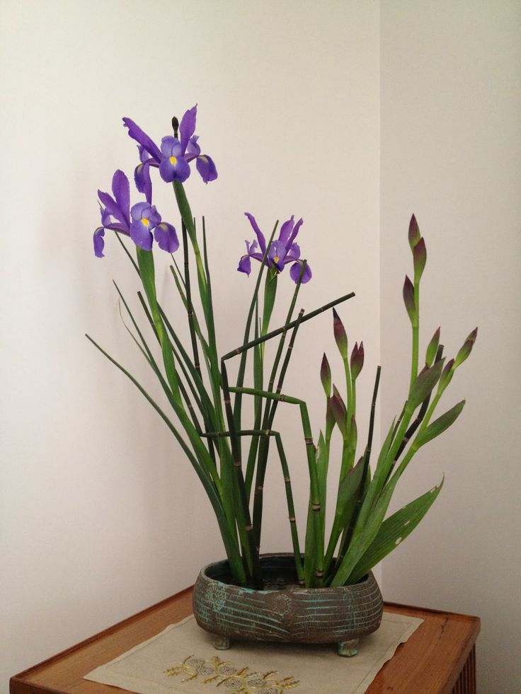 Evrim's Ikebana Journey: Japanese Boys Festival arrangement, Irises