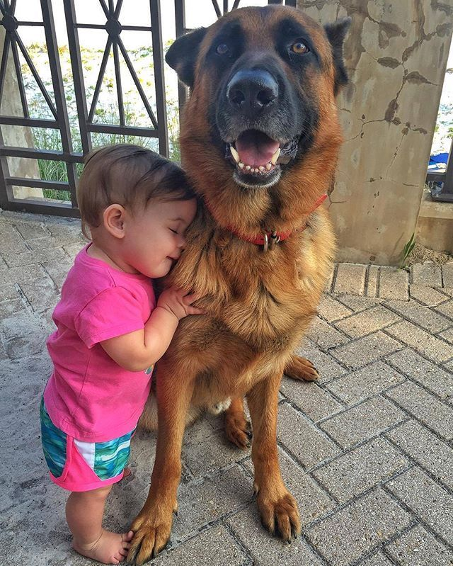 Could you get any sweeter?! @germanshepherd_instagram germanshepherd #germanshepherds #germanshepherdmemes #germanshepherdphotos #germanshepherddog #gsdstagram #germanshepherdpictures#gsd #gsdphotos #gsdpictures German Shepherd, German Shepherds, German Shepherd dog, german shepherd memes, german shepherd photos, gsdstagram, german shepherd pictures, gsd, gsdphotos, gsd pictures