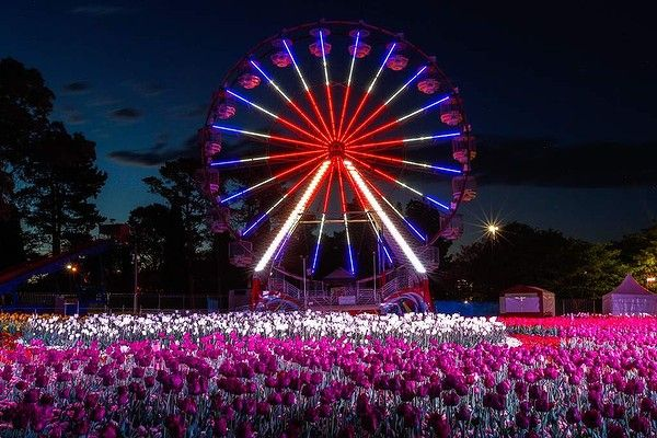 The Ferris wheel at Floriade's Nightfest. Photo: Katherine Griffiths