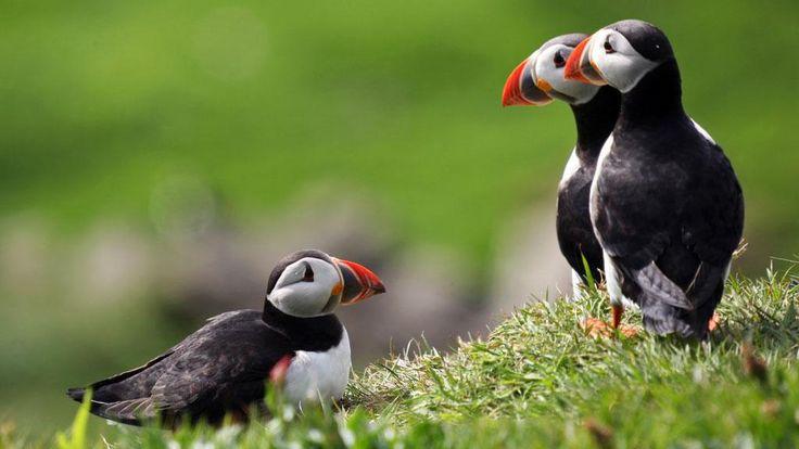 VisitDenmark - Isole Faroe