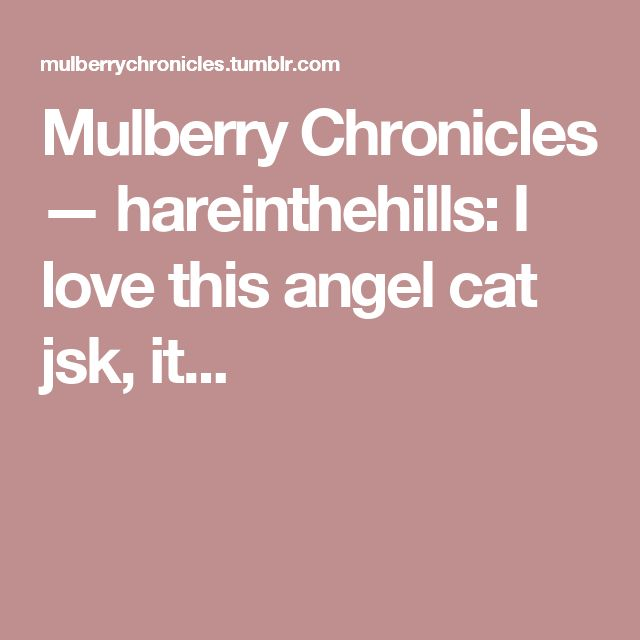 Mulberry Chronicles — hareinthehills:   I love this angel cat jsk, it...