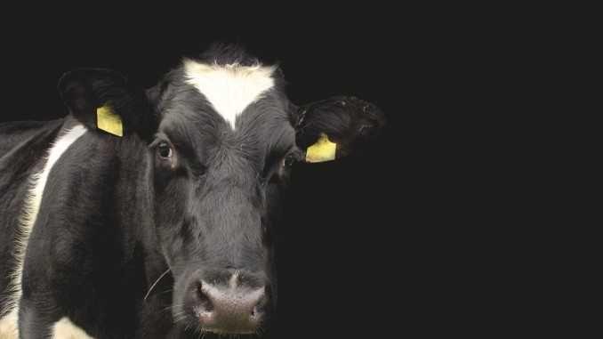 Víte jaká je nejlepší náhrada mléka? Zjistili jsme to za vás.