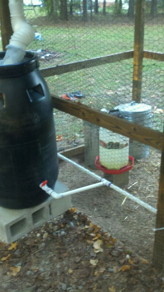 DIY Captured-Rainwater Chicken Coop Drinking Station.  wish the pics were still on the link.  but I get the idea.  Lots of screen filtering and using chicken nipples on the pvc.  and bleach monthly to keep it less moldy.