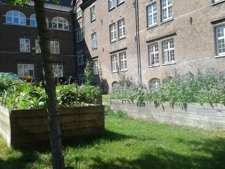 Verrücktes Huhn: Blick auf die grüne Stadt Kopenhagen