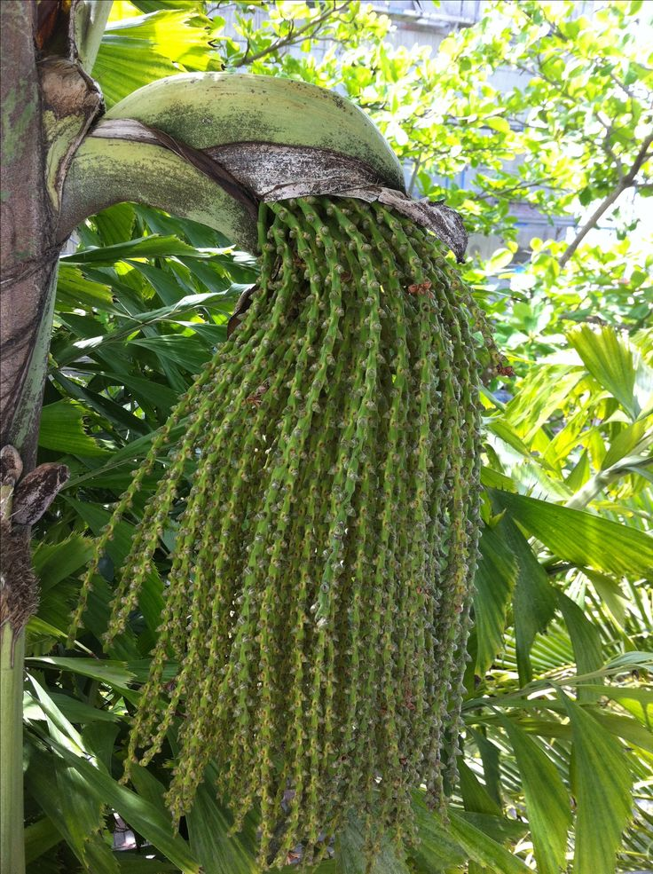 Unusual tropical plant http://www.hotmix106.com/
