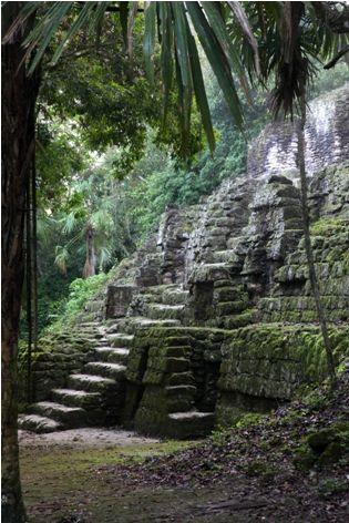 El Tikal es un Ciudad antiguo, la ubicación de este Ciudad es en el petén, Guatemala. El Tikal  solía ser las mayas antiguos mas poderoso reinos de su Tiempo. Este Ciudad antiguo ahora esta en un Parque Nacional que llama Tikal Nacional Parque.