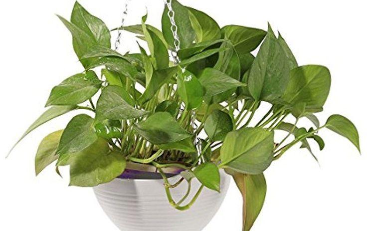 Garden Pots 2pcs Hanging Flower Basket EMPTY Flowerpot Plant Hooks Hangers -