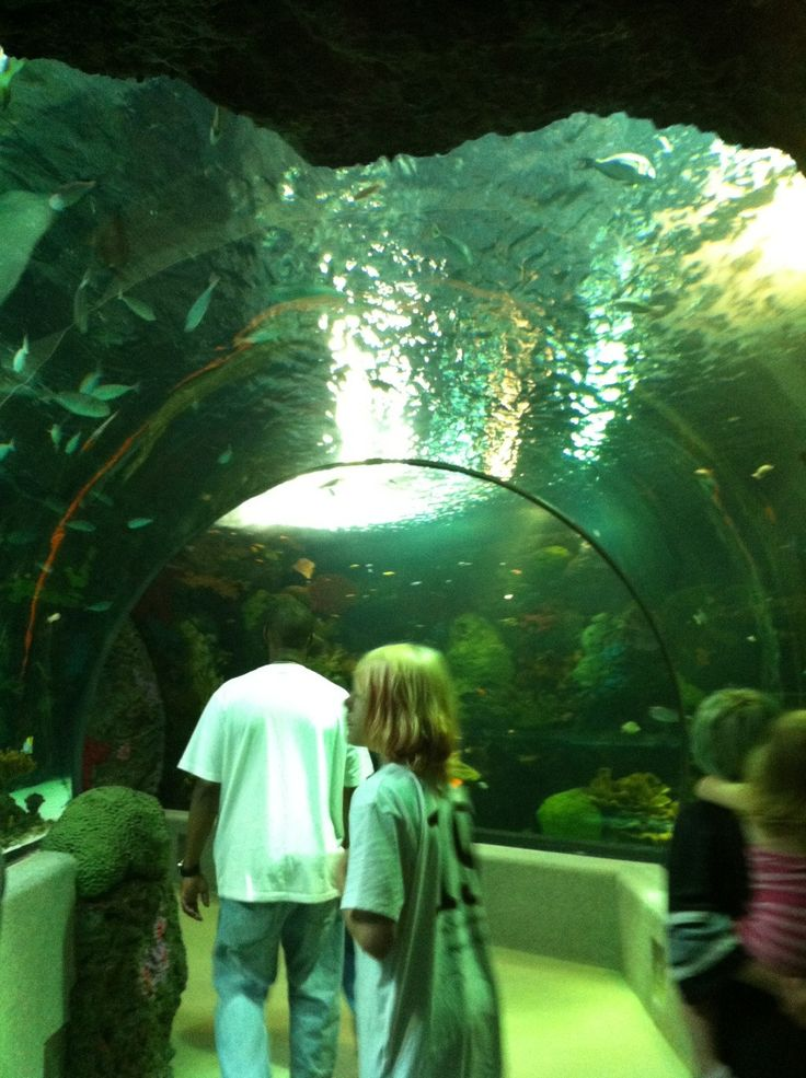 Live the Life when You Visit Virginia Beach- Virginia Beach Aquarium