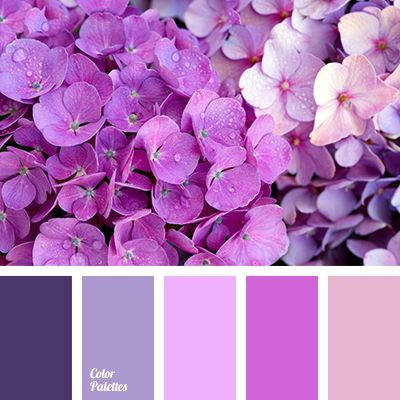 color matching, color of hydrangea, color of purple orchids, color solution for house, dark purple color, designer palettes, lilac color,…