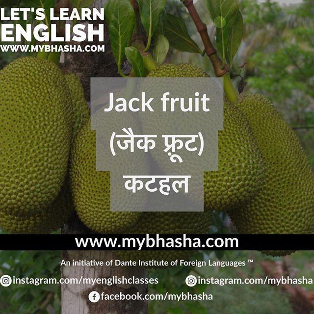 #english #vocabulary #kathal #vegetable #thorn #jack #fruit #jackfruit #hindi #online #mybhasha #priyanshu #sharma #called #instagram #channel #language #foreign