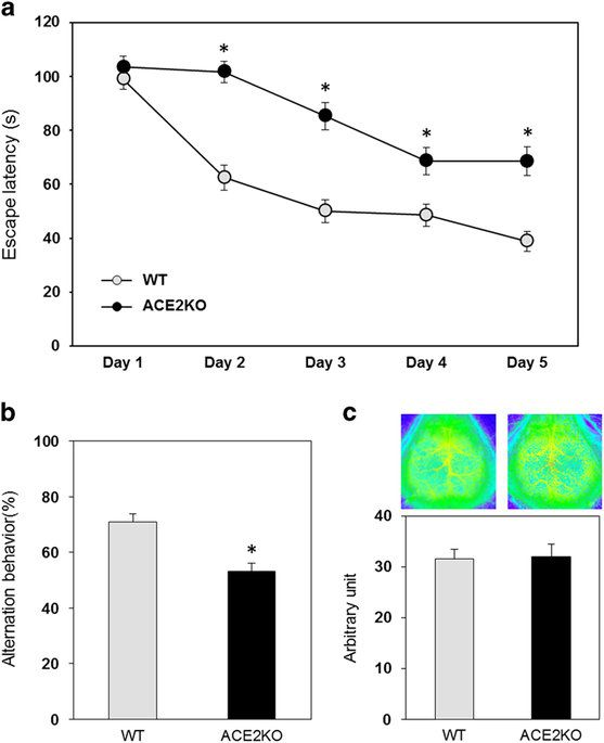 Deficiency of angiotensin-converting enzyme 2 causes deterioration of cognitive function  #ACE2deficiency #Angiotensin #AngiotensinIIreceptortype1 #Angiotensin-convertingenzyme #biology #Brain-derivedneurotrophicfactor #cellbiology #cellsignaling #Deficiency #Developmentalneuroscience #Gproteincoupledreceptors #Health_Medical_Pharma #Peptidehormones #Renalphysiology #Renin Check more at...