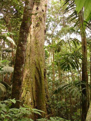Plantas medicinales de las selvas tropicales de Costa Rica | eHow en Español