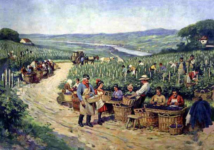 Wijnoogst in zuidfrankrijk een schoolplaat uit begin 1900 de naam van de plaat is wijnbouw in - Wijnoogst ...