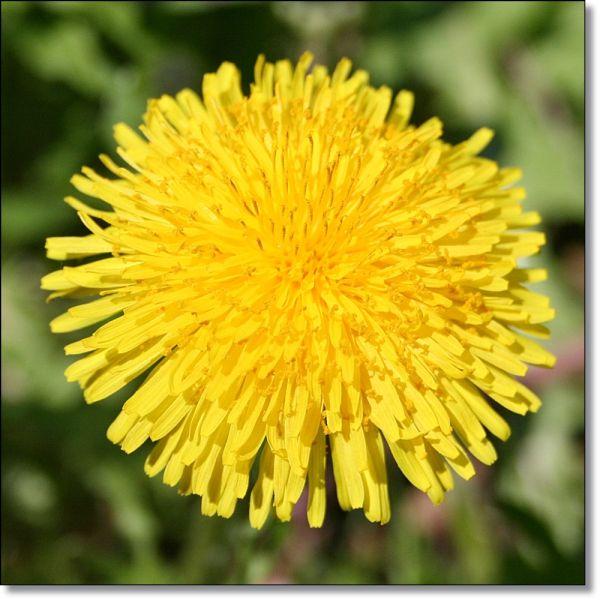 Ho deciso di creare delle nuove pagine sul blog per dare risalto a delle tematiche culinarie che mi stanno particolarmente a cuore, come la cucina con i fiori, quella con le erbe spontanee, i frutt…