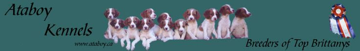 Dog Training Brittany Puppies First Year