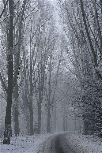 Foggy Winter by Martien Uiterweerd | Flickr - Photo Sharing!