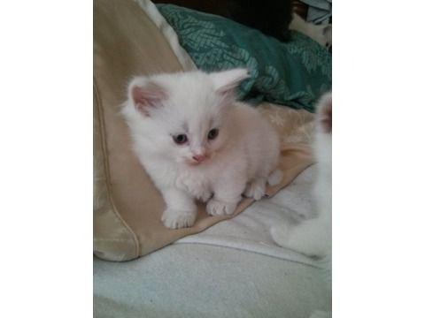 best cat treats for kittens