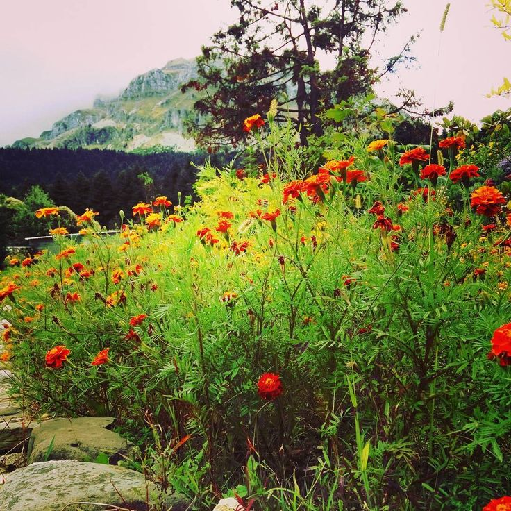 Beautiful colours #tzoumerkamountains #tzoumerka #orizontestzoumerkon #discovertzoumerka #flowers #mountains