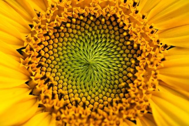 macro fractal