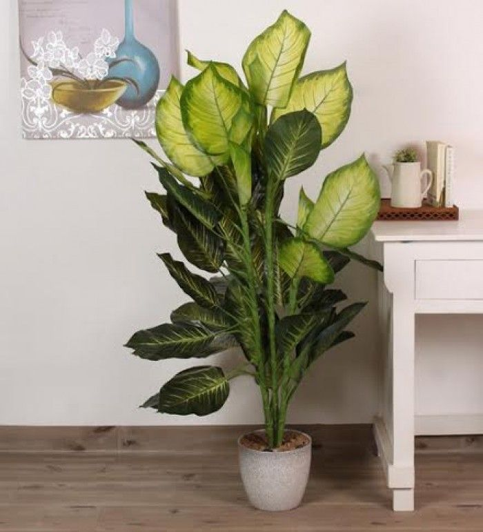 53 best beautiful plants for home and office faux images for Green floor plant