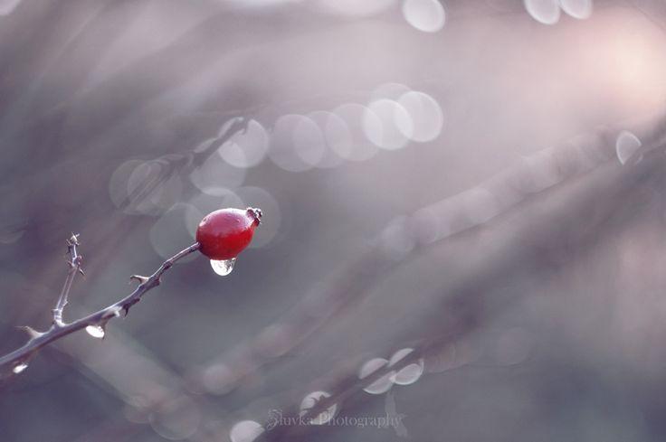 Another cold morning by Veronika Žlůvová on 500px