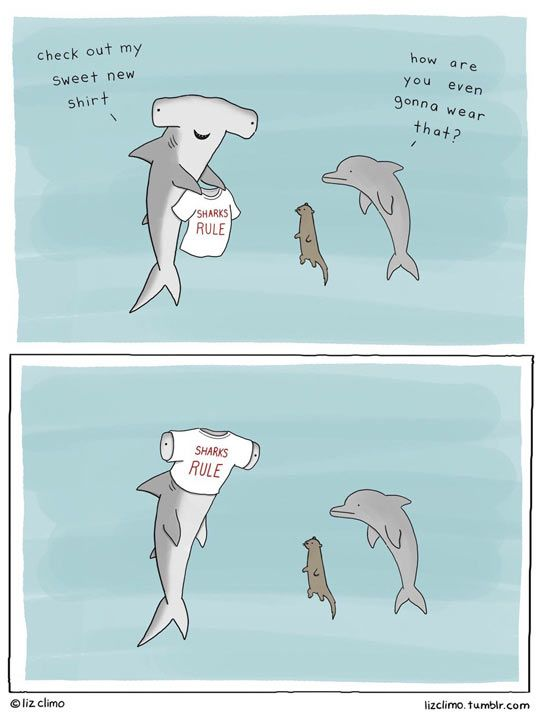 Sharks Rule                                                                                                                                                     More
