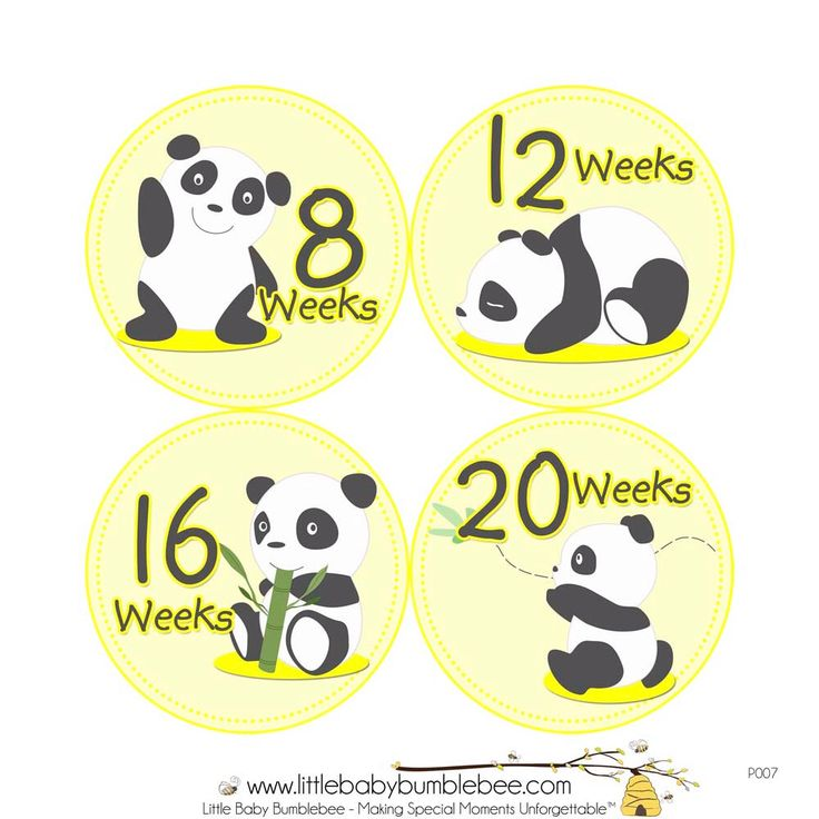 Pregnancy Stickers, Pregnancy Announcement, Weekly Stickers, Belly Stickers, Maternity Photo Prop, Belly Bump Stickers, Panda Yellow (P007) by LittleBabyBumblebee on Etsy https://www.etsy.com/listing/128569051/pregnancy-stickers-pregnancy