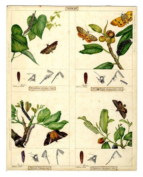 Arctiidae and Noctuidae moth families