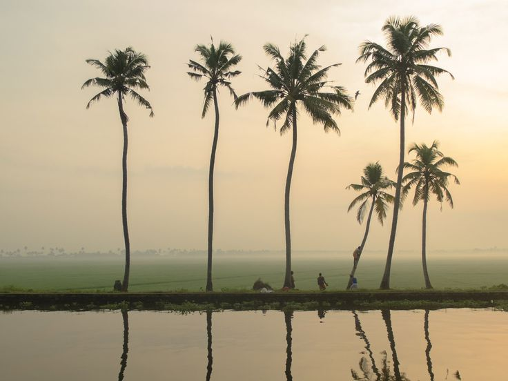 Coconut palms by the backwaters. Fujifilm X20