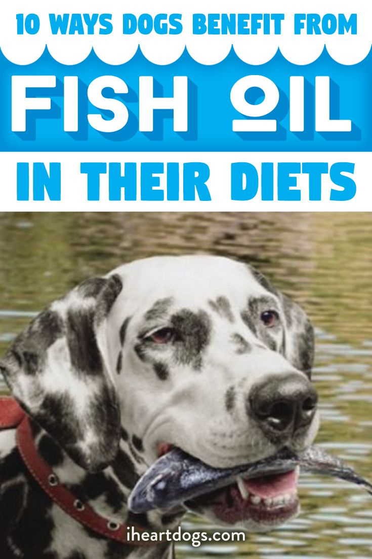 Fish oil is good for both you and your pet!