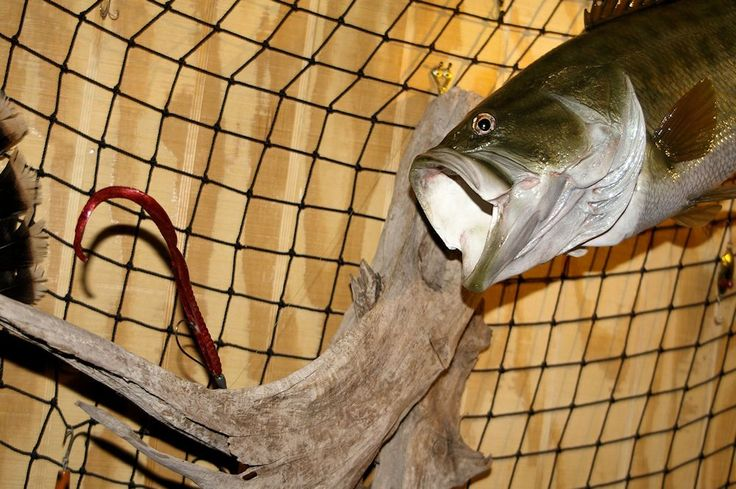 Crappie eye detail taxidermy pinterest photos eyes for Fish taxidermy prices