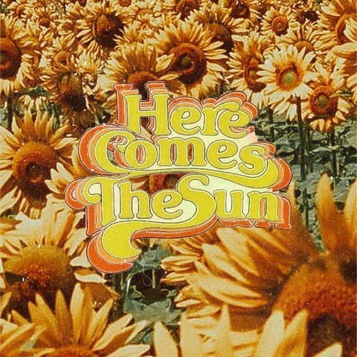 #sunflowersfordays – #aesthetic #sunflowersfordays
