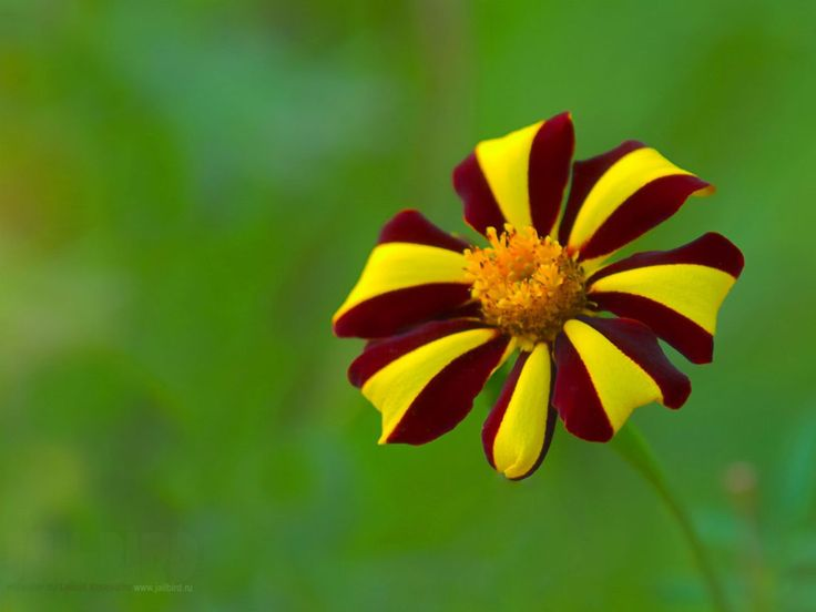 Brown Yellow Flower Wallpaper Free Download HD - Wallpaper Likes