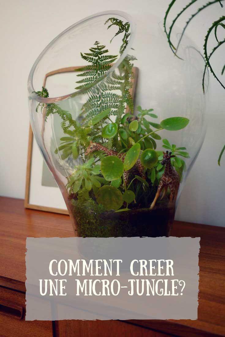 Comment Faire Un Terrarium Plante Grasse comment créer une micro-jungle à la maison ? | nature crafts