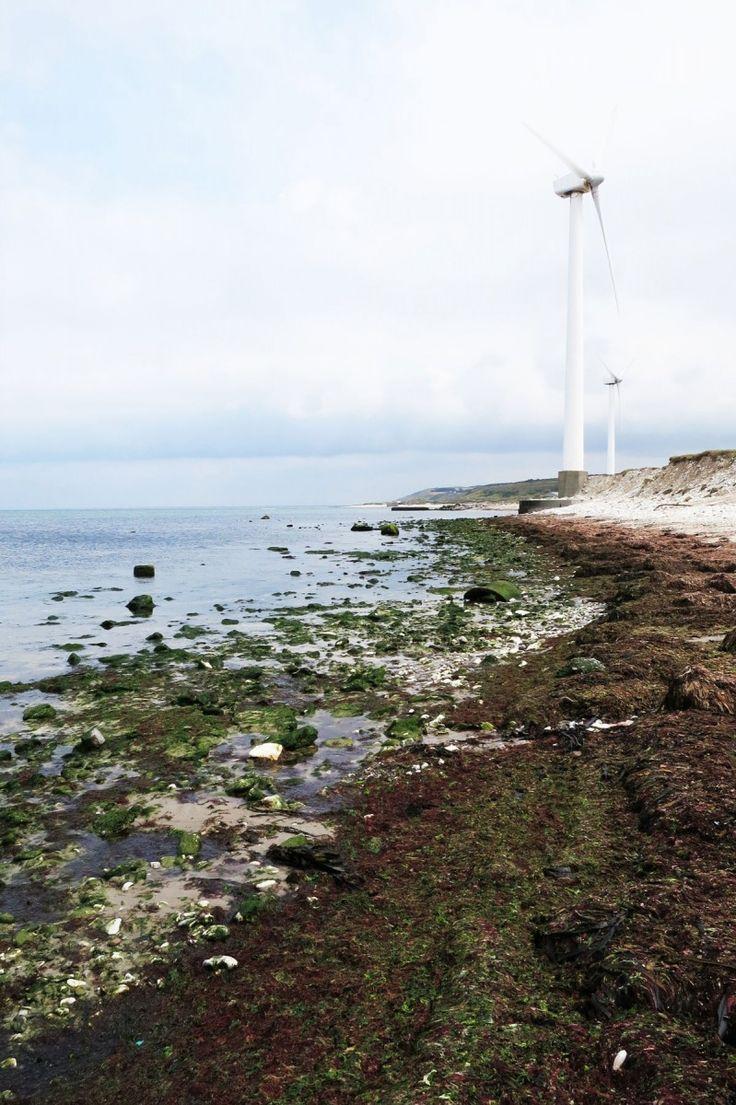 Meubels van zeewier - Wonen Voor Mannen