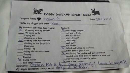 Report card from best friends doggy daycare barkworld for Best doggy day care