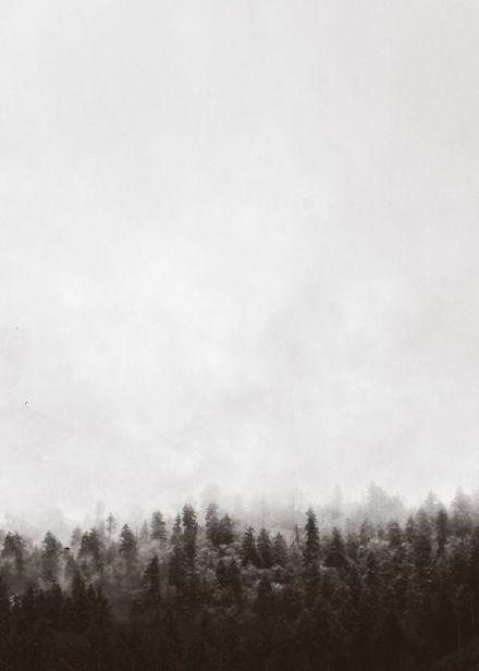 唯美森林图片