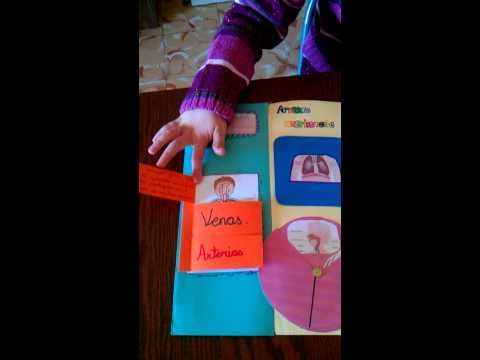 video lapbook cuerpo humano wmv - YouTube