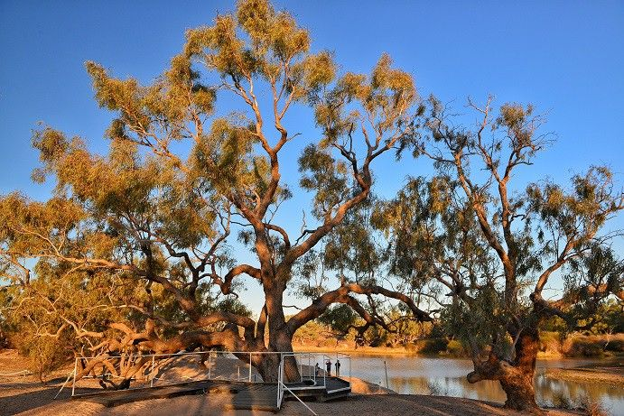 On the way to Birdsville, stop in at the Dig Tree, the territory where Burke and Wills met their end #thisisqueensland
