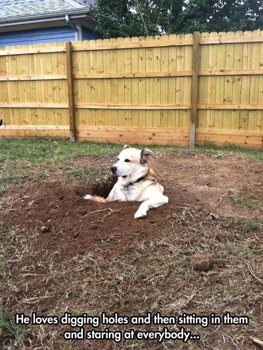 """LOL! We have had some """"digging dogs""""! - More proof that dogs have mastered the art of chillin'."""