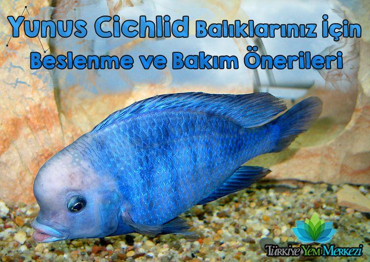 Yunus Ciklet Beslenme ve Bakım Önerileri http://www.turkiyeyemmerkezi.com/yunus-ciklet-beslenme-ve-bakim-onerileri